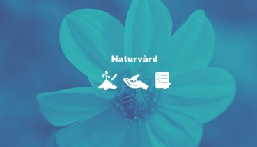 Naturvård